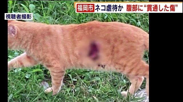 ニュース 動物 虐待 「動物虐待を楽しんでいた」52歳男に見る心の闇